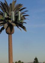 5g izkustvena palma