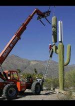 5g kaktus